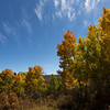 Clouds and Aspens, Rio Arriba County, NM