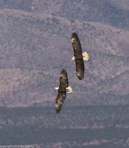2015 - Bosque del Apache-1751