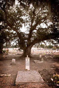 """Monday Photo Of The Day: Cemeteries; Holt Cemetery - """"So Sadly Misted""""...."""