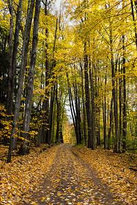 Fall County Road Fun