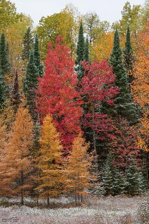 Michigan's Happy Little Trees