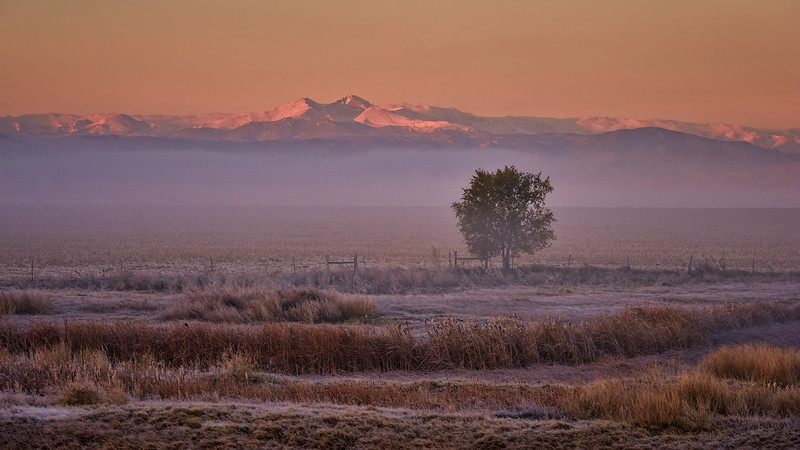Early Winter's Foggy Morn