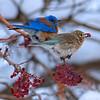 Frosty Blue Love