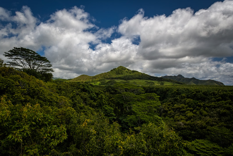 The Verdant Green Splendor of Tropical Kauai