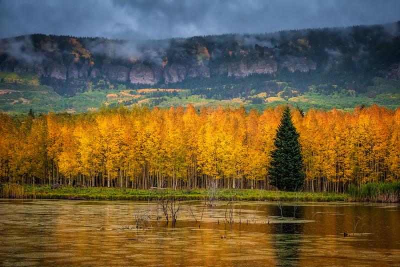Autumn's Reign