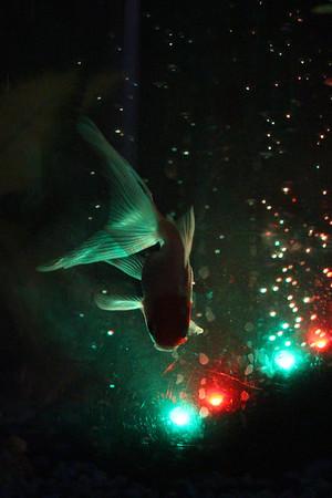 Matthew's  Fish...
