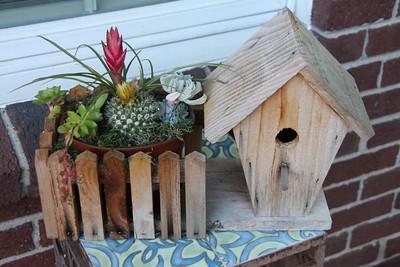 Cactus Garden...