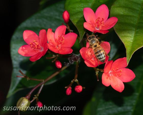 The Pollenator