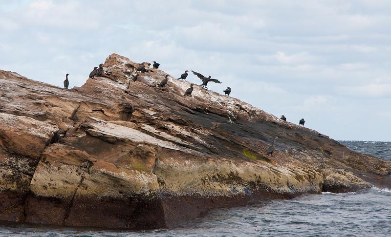 Bird Island, Sidney