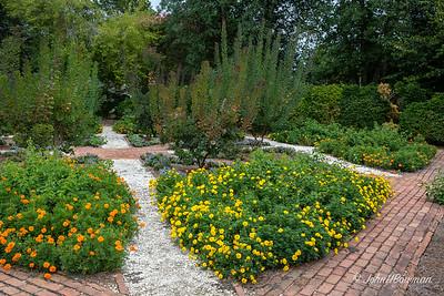 Maigolds at Colonial Garden & Nursery