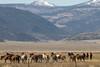 Wild Horses Eastern Sierra-1