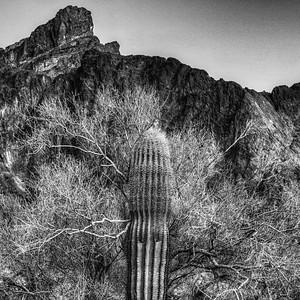 Kofa Mountains AZ 2020-11
