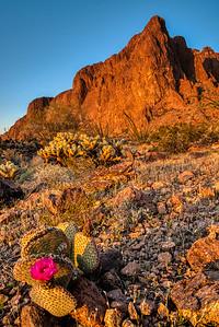 Kofa Mountains AZ 2020-7
