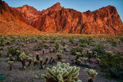 Kofa Mountains AZ 2020-9