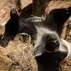 Henry Doorley Zoo<br /> Omaha, NE <br /> 08/16/18