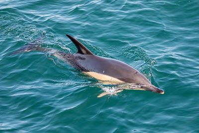Heureux comme un dauphin (Happy as a dolphin)