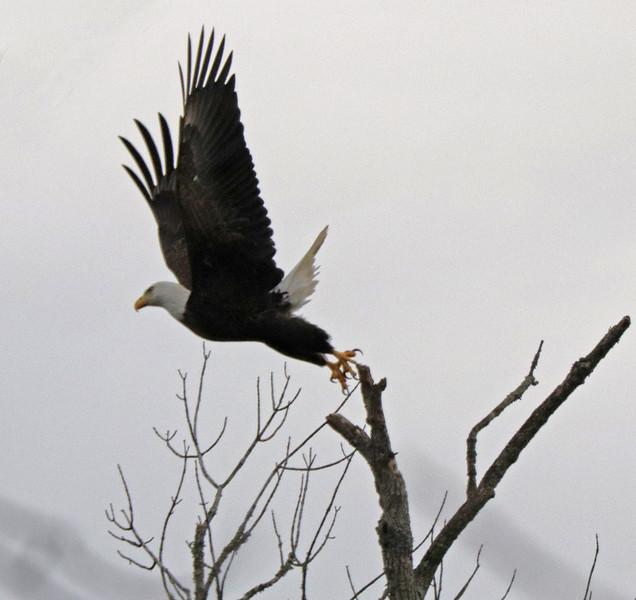 Eagle 55