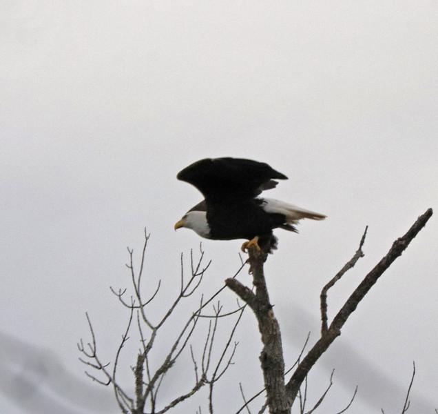 Eagle 54