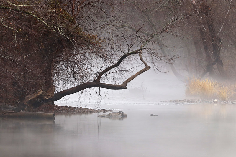 Haw in the mist 1