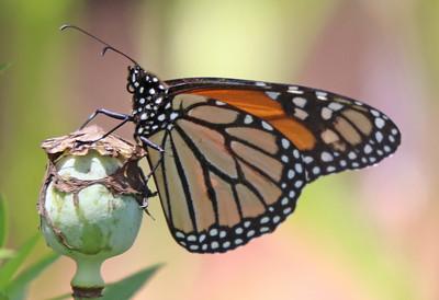 Monarch 941