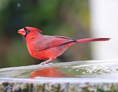 Cardinal 508