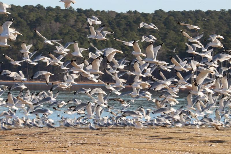 Flock 4