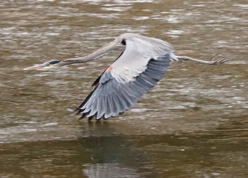 Heron 92
