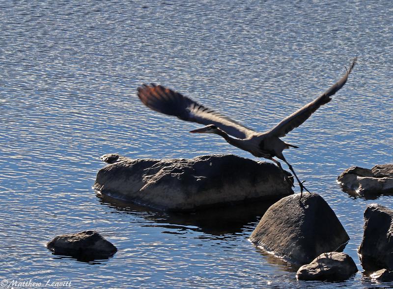 Heron ascending 1