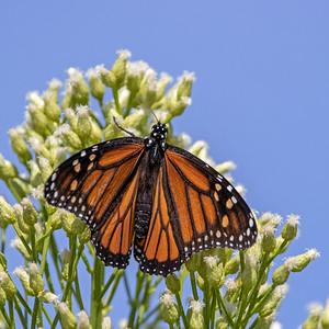 2019-10-27  Monarch