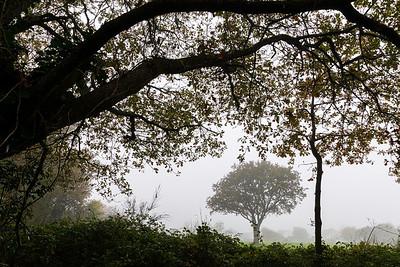 Dans la brume un dimanche matin (In the mist on a Sunday morning)