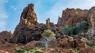 Un très vieux génévrier dans les hauteurs de la réserve de Scandola (Porto - Sevinfuori - Haute Corse) - A very old juniper in the heights of the Scandola reserve