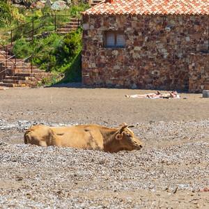 Qui copie qui ! la vache ou ces touristes en train de se daire bronzer !  - Who copies who! the cow or those tourists sunbathing! (Galéria - Filosorma - Haute Corse)