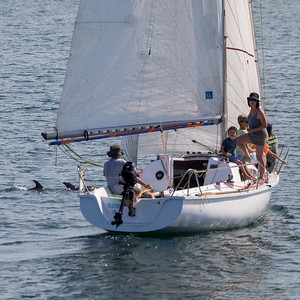Naviguer avec les dauphins (Sailing with dolphins)