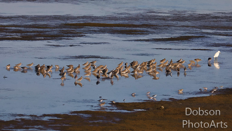 Mixed Shorebird Picnic