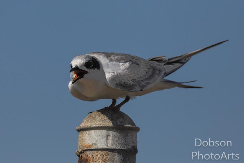 Tern's  Turn