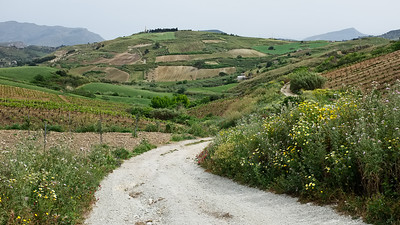 Near Salemi, Sicily