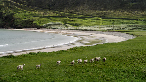 Fetlar Island, Shetlands, UK