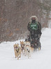 Mushing Sled Dogs, Apostle Island Sled Dog Races, Bayfield County, Wisconsin