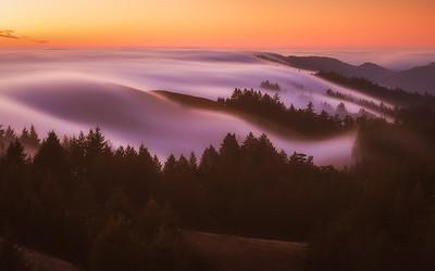 Mount Tam Fog