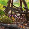 Autumn vignette, woodland border