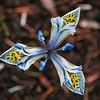 Iris reticulata 'Katharine Hodgkin'