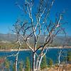 Dead Tree Grove 1