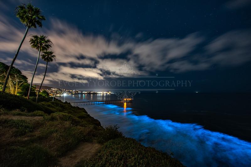 Bioluminescence Above Scripps