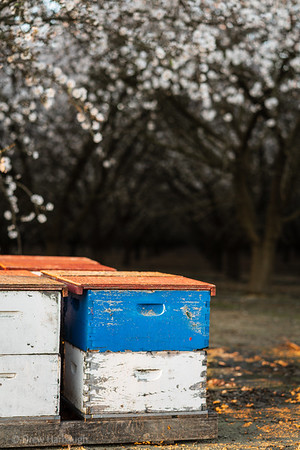 Bees in the Box
