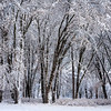 Snow-Blanket Trees