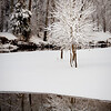 Snowy Tree and Reflection