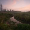 High Meadow Morning