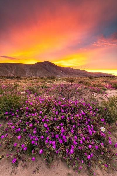 """""""Purple Sunrise"""""""