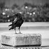 Little Crow at the Park