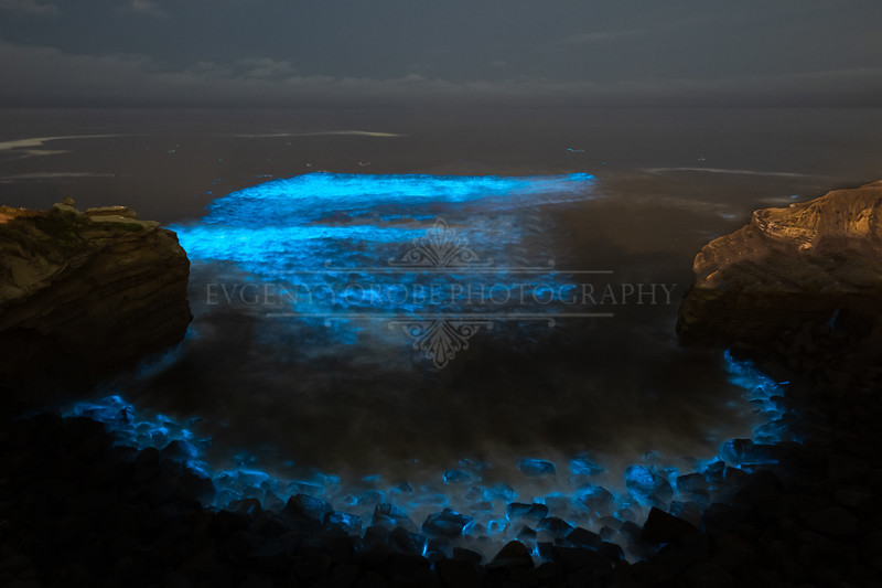 Bioluminescence at Sunset Cliffs